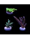 Korallpaket